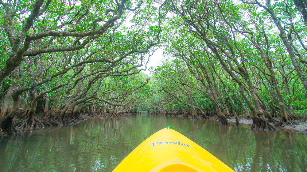 Virgin Mangrove Forest