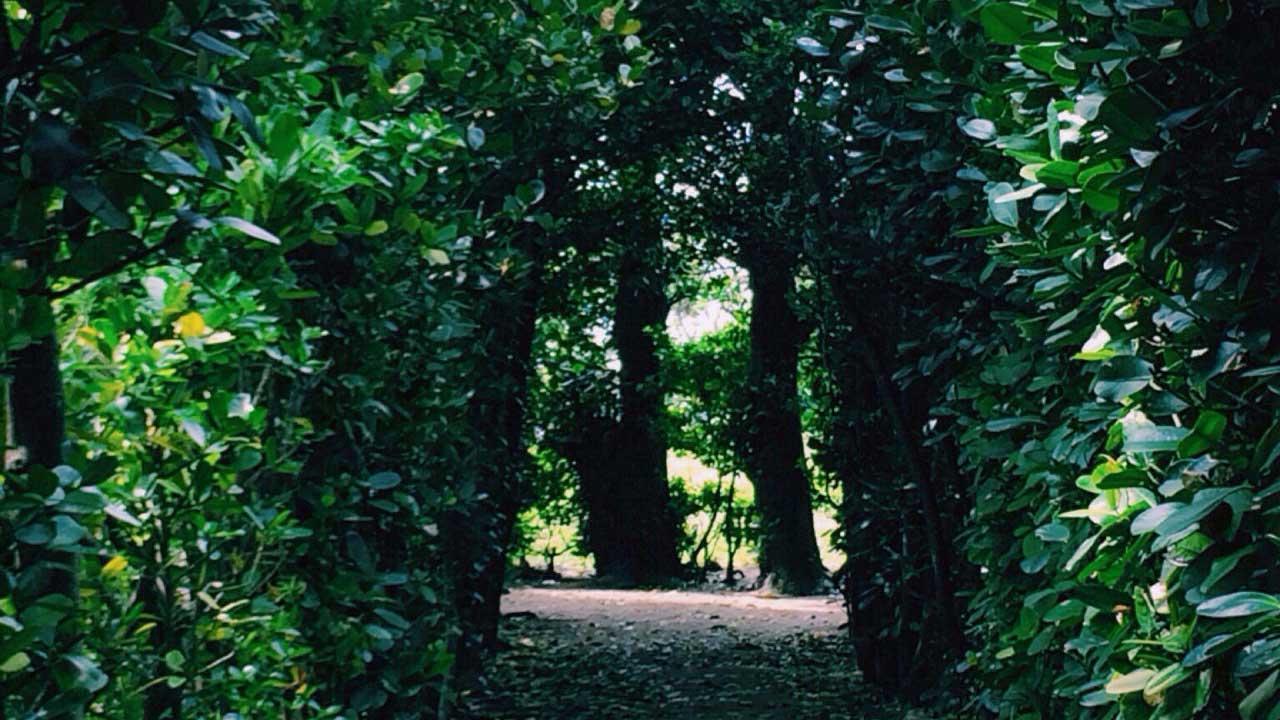福をもたらす木で囲まれた小道を歩いて幸せな気分になろう!