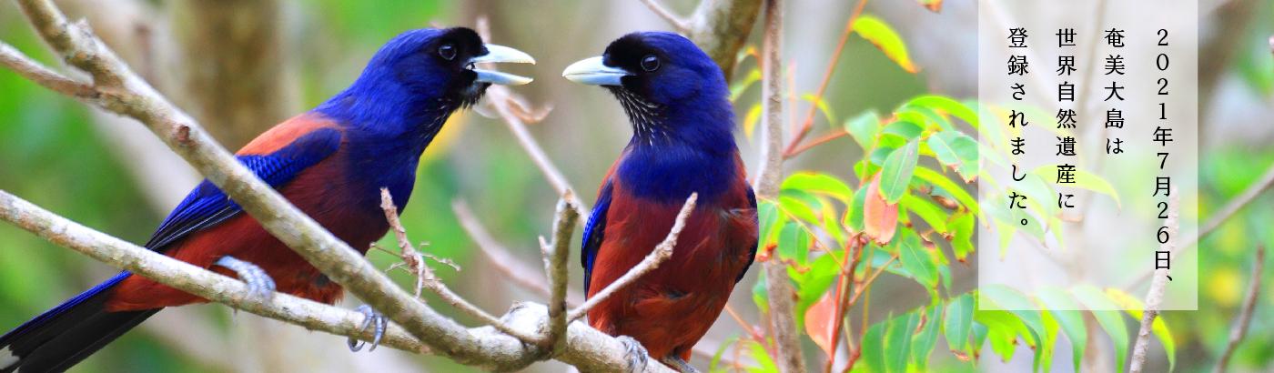 世界自然遺産登録